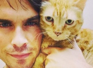 celebrities who own cats