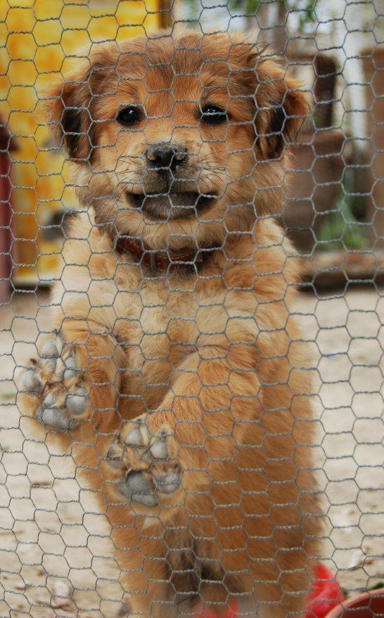 worst puppy mills in america