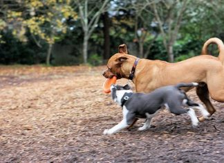 dog park, dog park rules, dog park mistakes