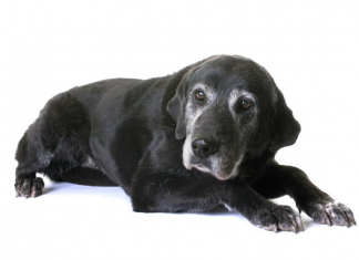 Caring for a senior animal